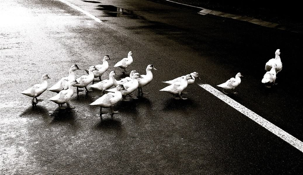 effects of groupthink